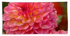 Beach Sheet featuring the photograph Hamari Rose - Dahlia by Jordan Blackstone