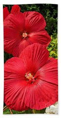 Beach Towel featuring the photograph Hardy Hibiscus by Sue Smith