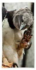 Harpy Eagle Beach Towel