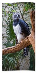 Beach Sheet featuring the photograph Harpy Eagle by Ken Stanback