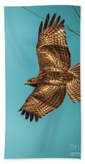 Hawk In Flight Beach Towel