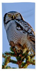 Hawk Owl Square Beach Towel