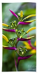 Beach Towel featuring the photograph Heliconia Subulata II by Heiko Koehrer-Wagner