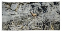 Big Horn Sheep Coming Down The Mountain  Beach Towel
