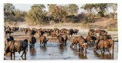 Herd Of Cape Buffalos Syncerus Caffer Beach Towel