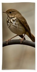 Hermit Thrush Beach Towel