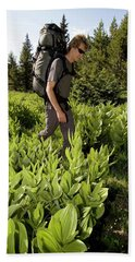 Hikers In Forest In Colorado Beach Towel