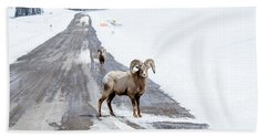 On The Road Again Big Horn Sheep  Beach Towel
