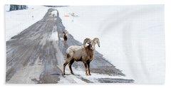 On The Road Again Big Horn Sheep  Beach Sheet
