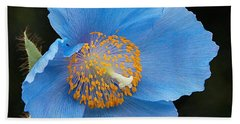 Himalayan Gift -- Meconopsis Poppy Beach Towel