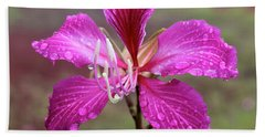 Hong Kong Orchid Tree Flower Beach Sheet by Venetia Featherstone-Witty