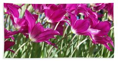 Beach Sheet featuring the photograph Hot Pink Tulips 2 by Allen Beatty