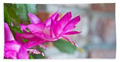 Hot Pink Christmas Cactus Flower Art Prints Beach Sheet