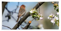 House Finch Beach Towel by Mike Dawson
