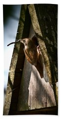 House Wren At Nest Box Beach Towel