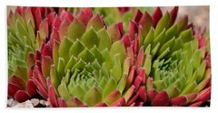 Houseleeks Aka Sempervivum From The Side Beach Sheet