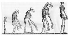 Human Evolution 1883 Beach Towel