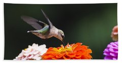 Hummingbird In Flight With Orange Zinnia Flower Beach Sheet