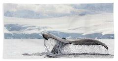 Humpback Whale Fluke, Wilhelmina Bay Beach Towel