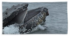 Beach Sheet featuring the photograph Humpback Whale  Lunge Feeding 2013 In Monterey Bay by California Views Mr Pat Hathaway Archives