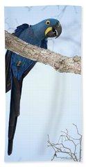 Hyacinth Macaw Anodorhynchus Beach Towel