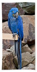 Hyacinth Macaw Parrot Bird Art Prints Beach Sheet