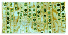 Micrography Beach Towels