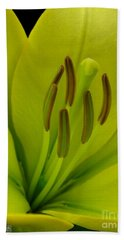 Beach Towel featuring the photograph Hybrid Lily Named Trebbiano by J McCombie