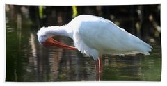 Beach Towel featuring the photograph Ibis Preening by Daniel Reed