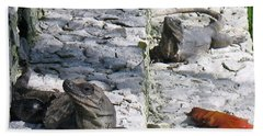 Beach Towel featuring the photograph Iguana Bask In The Sun With You by Patti Whitten