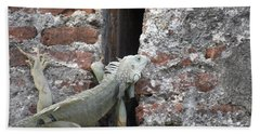 Beach Towel featuring the photograph Iguana by David S Reynolds