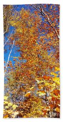 In The Forest At Fall Beach Towel