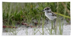 In The Grass - Wilson's Plover Chick Beach Towel