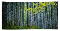 Beach Towel featuring the photograph In The Woods by Belinda Greb