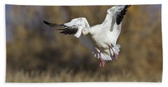 Beach Sheet featuring the photograph Incoming Snow Goose by Bryan Keil