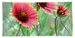 Indian Blanket Wildflowers Beach Towel