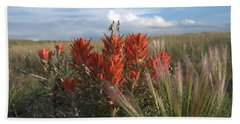 Indian Paintbrush Beach Sheet