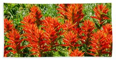 Indian Paintbrush Beach Sheet by Sue Smith