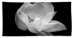 Indian Sacred Lotus In Black And White Beach Towel