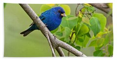 Blue Indigo Bunting Bird  Beach Towel by Luana K Perez