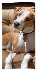 Inquisitive Beach Towel by Jean Haynes