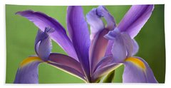 Iris Elegance Beach Sheet by Deb Halloran