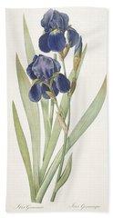 Iris Germanica Bearded Iris Beach Towel by Pierre Joseph Redoute