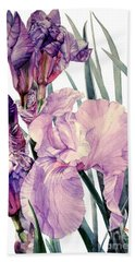 Watercolor Of An Elegant Tall Bearded Iris In Pink And Purple I Call Iris Joan Sutherland Beach Towel