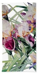 Watercolor Of Tall Bearded Irises I Call Iris Vivaldi Spring Beach Towel