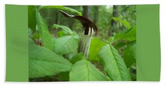 Jack In The Pulpit Beach Towel