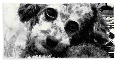 Beach Towel featuring the photograph Jack by Lenore Senior
