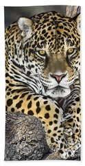 Beach Towel featuring the photograph Jaguar Portrait Wildlife Rescue by Dave Welling