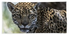 Jaguar Portrait Beach Sheet
