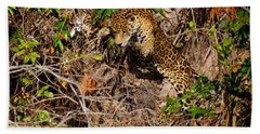 Jaguar Vs Caiman 2 Beach Towel